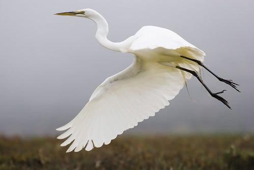 Newport Birding 2